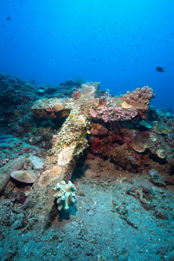 A graveyard sank in Camiguin, Philippines, during the 1971 earthquake, now overgrown with corals coral,corals,coral reef,reef life,reef,invertebrate,invertebrates,marine invertebrate,marine invertebrates,marine,marine life,sea,sea life,ocean,oceans,water,underwater,aquatic,substrate,habitat,growt