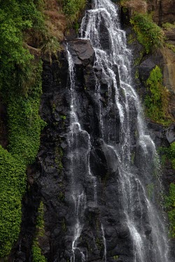 A waterfall in Lamington National Park. Australia habitat,water,waterfall,tropic,tropics,tropical,landscape,green,greenery,rock,cliff,cascade,waterfalls,overflow,rain,rainy,wet,rainforest,national park