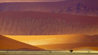 Multi-coloured sand dunes in the Namib Naukluft National Park landscape,desert,deserts,colours,colors,colourful,colorful,multicoloured,multicolored,red,orange,Namib,dunes,sand,sand dunes,arid,dry,hot,warm,Naukluft mountains,Namibia,Africa,African