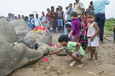 Children shows their respect to elephants who died from electrocution elephant,elephants,trunk,trunks,herbivores,herbivore,vertebrate,mammal,mammals,terrestrial,dead,death,sad,conflict,humans,people,human impact,children,child,funeral,Asian elephant,Elephas maximus,Mamm