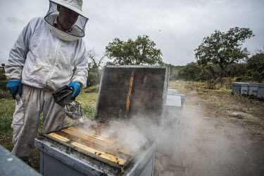 Beekeeping is low impact and has no effect on the lynx, which this land is used for bees,bee,honey bees,honeybee,honeybees,farming,hive,beehive,bee hive,bee keeping,honey,land use,farm,insect,insects,invertebrate,invertebrates,humans,people,agriculture,smoke,Honey bee,Apis mellifera,