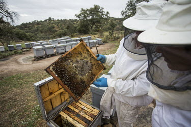 Beekeeping is low impact and has no effect on the lynx, which this land is used for bees,bee,honey bees,honeybee,honeybees,farming,hive,beehive,bee hive,bee keeping,honey,land use,farm,insect,insects,invertebrate,invertebrates,humans,people,agriculture