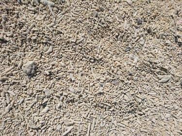 A beach made of dead coral coral,corals,coral reef,sea life,sea creature,dead,skeleton,skeletons,dead coral,coral beach,beach,dead corals,substrate