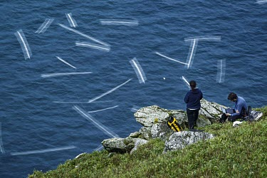 Researchers monitor gannets flying past at speed gannets,Northern gannet,bird,birds,flying,flight,seabird,seabirds,atmospheric,action,motion,sea,ocean,oceans,coast,coastal,coastline,researchers,conservationists,science,tracking,telemetry,monitoring,