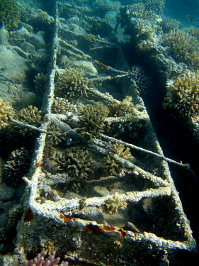 An artificial reef providing substrate for coral coral,corals,coral reef,reef,invertebrate,invertebrates,marine invertebrate,marine invertebrates,marine,marine life,sea,sea life,ocean,oceans,water,underwater,aquatic,sea creature,artificial reef,Cora