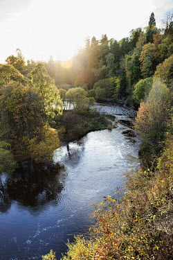A river flowing through Scottish woodland Scotland,river,landscape,habitat,freshwater,rivers,stream,streams,forest,woodland,trees,tree,autumn,sunlight,leaves,seasons,beauty in nature,idyllic,tranquil scene