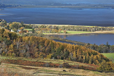 Scenery of the Dornoch firth, Scotland Scotland,river,landscape,habitat,freshwater,forest,woodland,trees,tree,autumn,leaves,seasons,firth,waterbody,beauty in nature,idyllic,tranquil scene