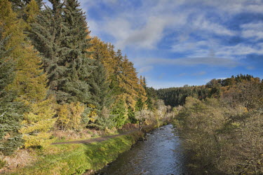 Autumnal coloured trees with stream Scotland,river,landscape,habitat,freshwater,rivers,stream,streams,forest,woodland,trees,tree,autumn,sunlight,leaves,seasons,beauty in nature,idyllic,tranquil scene
