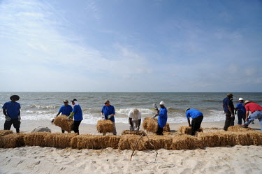 BP-hired workers bail straw into barriers along Dauphin Island's beaches Deepwater Horizon,BP,BP oil spill