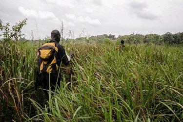 Anti-poaching team moving through tall grass, Uganda Habitat protection,wildlife rangers,wildlife ranger,rangers,park rangers,guards,guard,Ranger,park ranger,Land management,humans,human,People,homo sapiens,persons,person,homo sapien