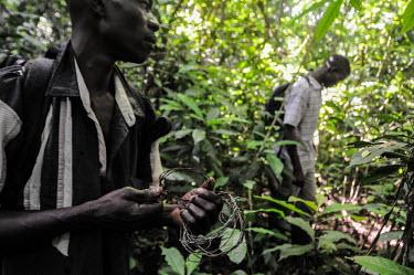 Anti-poaching team patrolling a forest, Uganda tropical,Tropical rainforest,tropics,tropic,jungles,jungle,Terrestrial,ground,wildlife rangers,wildlife ranger,rangers,park rangers,guards,guard,Ranger,park ranger,environment,ecosystem,Habitat,forest