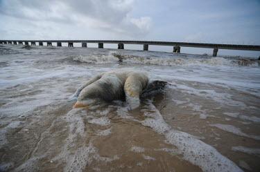 Dead turtles have been found along the Gulf coast since the BP oil spill environment,ecosystem,Habitat,saltwater,Marine,saline,Ocean,oceans,oceanic,Open ocean,Aquatic,water,water body