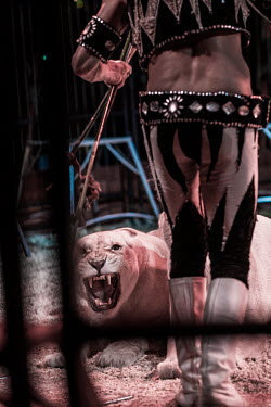 Lion being beaten into submission at a circus in France Sad,upset,sadness,guarded,guard,danger,Defensive,defense,protecting,guarding,defence,protective,warn,warning,protect,warns,negative,sad,Trafficking,wildlife trafficking,animal trafficking,animal traff