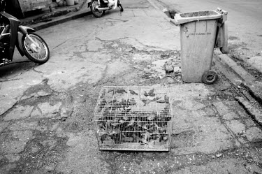 Birds cruelly kept in a tiny cage for a Vietnamese market Stage,Dead