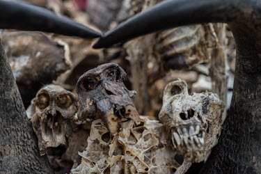 Muti market in Africa selling animal parts Persecution,Resource exploitation,Stage,Trafficking,wildlife trafficking,animal trafficking,animal traffic,black market,wildlife traffic,hunting,Hunting impact,Dead,Human impact,human influence,anthro