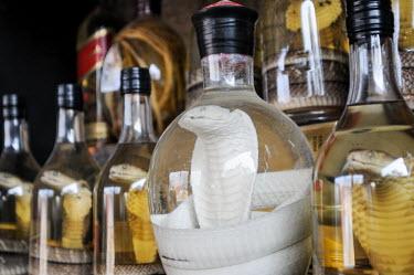 Dead cobra sold as snake wine in a Vietnamese market Dead,Stage,Animalia,Chordata,Reptilia,Squamata,Elapidae,cobra,cobras,snake,snakes,reptile,snake wine,market
