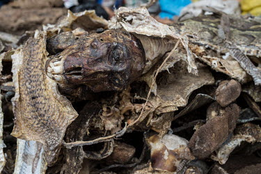Muti market in Africa selling animal parts Human impact,human influence,anthropogenic,Persecution,hunting,Hunting impact,Dead,Resource exploitation,Traditional medicine,Chinese medicine,traditional Chinese medicine,Trafficking,wildlife traffic