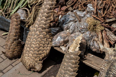 Muti market in Africa selling animal parts Resource exploitation,Persecution,hunting,Hunting impact,Human impact,human influence,anthropogenic,Traditional medicine,Chinese medicine,traditional Chinese medicine,Dead,Trafficking,wildlife traffic