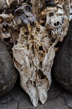Muti market in Africa selling animal parts skulls,skull,muti,carcass
