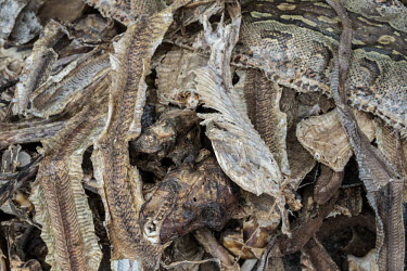 Muti market in Africa selling animal parts Human impact,human influence,anthropogenic,hunting,Hunting impact,Stage,Dead,Traditional medicine,Chinese medicine,traditional Chinese medicine,Persecution,Resource exploitation,Trafficking,wildlife t