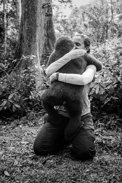 Ape Action Africa sanctuary in Cameroon tropical,Tropical rainforest,tropics,tropic,jungles,jungle,forests,Forest,Terrestrial,ground,Affection,affectionate,Happy,joyful,rain forest,tropical rainforest,tropical forest,Rainforest,friendly,Fri