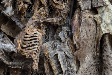 Muti market in Africa selling animal parts Traditional medicine,Chinese medicine,traditional Chinese medicine,Stage,Human impact,human influence,anthropogenic,hunting,Hunting impact,Resource exploitation,Dead,Trafficking,wildlife trafficking,a