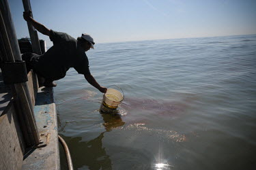 A man trying to remove oil spill from the surface of the water, USA coast,Coastal,coast line,coastline,trash,Waste pollution,litter,human waste,rubbish,garbage,Human impact,human influence,anthropogenic,Stage,Fossil fuel,Fossil Fuels,fuel,Oil,Dead,environment,ecosyste