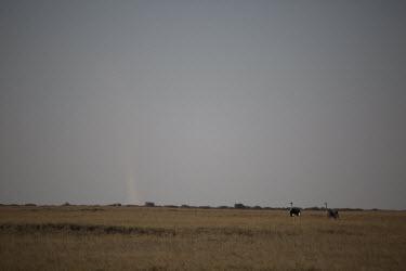 Ostrich - Botswana, Africa Terrestrial,ground,environment,ecosystem,Habitat,Ostrich,Struthio camelus,Ostriches,Struthionidae,Aves,Birds,Struthioniformes,Chordates,Chordata,Common ostrich,Autruche,camelus,Animalia,Omnivorous,Sav
