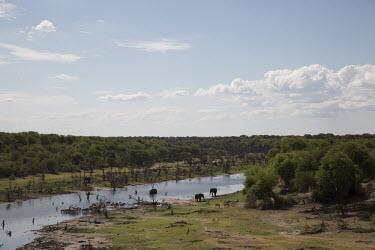 African elephant - Botswana, Africa herds,gamming,Herd,herding,assemble,Plains zebra,Equus quagga,zebra,African elephant,Loxodonta africana,Elephants,Elephantidae,Chordates,Chordata,Elephants, Mammoths, Mastodons,Proboscidea,Mammalia,Ma