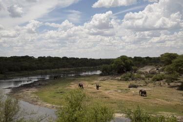 African elephant - Botswana, Africa riverine,riparian,Riverbank,Tributary,environment,ecosystem,Habitat,River,rivers,Aquatic,water,water body,herds,gamming,Herd,herding,assemble,African elephant,Loxodonta africana,Elephants,Elephantidae