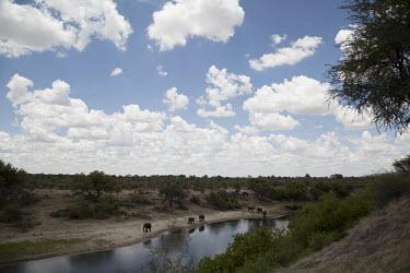 African elephant - Botswana, Africa Tributary,River,rivers,Aquatic,water,water body,herds,gamming,Herd,herding,assemble,environment,ecosystem,Habitat,riverine,riparian,Riverbank,African elephant,Loxodonta africana,Elephants,Elephantidae
