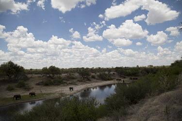 African elephant - Botswana, Africa riverine,riparian,Riverbank,environment,ecosystem,Habitat,Aquatic,water,water body,Tributary,herds,gamming,Herd,herding,assemble,River,rivers,African elephant,Loxodonta africana,Elephants,Elephantidae