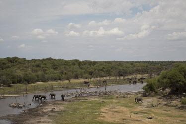 African elephant - Botswana, Africa environment,ecosystem,Habitat,herds,gamming,Herd,herding,assemble,River,rivers,riverine,riparian,Riverbank,Aquatic,water,water body,Tributary,Plains zebra,Equus quagga,zebra,African elephant,Loxodonta