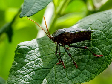 Wamboin, NSW, Australia.  At least, I think it's an Assassin Bug. Suggestions welcomed. assassinbug,wamboin,nsw,australia,davidcookwildlifephotography,kookr,sonya6500,sonyilce6500,sonysal70400g2,sonylaea3,�2017davidcookwildlifephotographyallrightsreserved