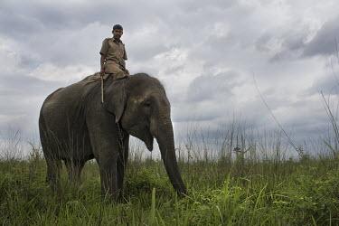 Asian elephant and a mahout - Bengal mahout,Asian elephant,Elephas maximus,Mammalia,Mammals,Elephants,Elephantidae,Chordates,Chordata,Elephants, Mammoths, Mastodons,Proboscidea,Indian elephant,Elefante Asi�tico,El�phant D'Asie,El�phant D