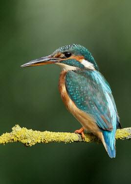 Kingfisher - UK Multi-coloured,multicoloured,multi-colored,colorful,multicolored,colourful,colours,color,colors,Colour,blur,selective focus,blurry,depth of field,Shallow focus,blurred,soft focus,coloration,Colouratio