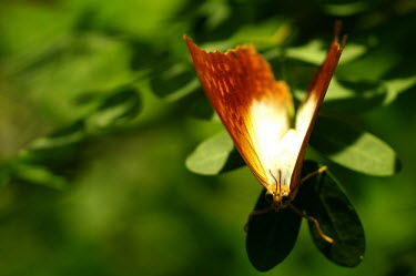 Butterfly - Butterfly Wonderland, USA Macro,macrophotography,Close up,Animalia,Arthropoda,Insecta,Lepidoptera,butterfly,butterflies,insect,insects