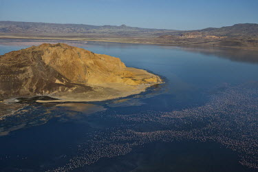 Lake shores of Nakuru and Bogoria filled with thousands of lesser flamingos - Kenya wilderness,Landscape,colours,color,colors,Colour,coloration,Colouration,Colonisation,Colony,Colonial,pink,migration,migrate,Migratory,travel,elevated view,Aerial,flamingo,flamingos,bird,birds,Lesser f