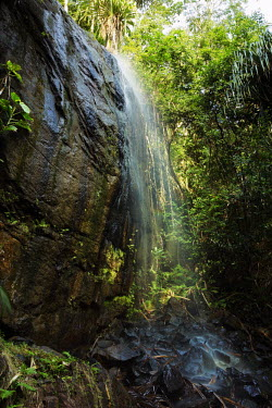 Valle'e De Mai World Heritage site on Praslin - Seychelles Habitat protection,tropical,Tropical rainforest,tropics,tropic,jungles,jungle,Terrestrial,ground,Habitat loss,environment,ecosystem,Habitat,forests,Forest,Tropical,Land management,reserve,conservation