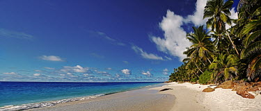 Anse Victorin, Fregate island - Seychelles Panoramic view of Anse Victorin beach and palm trees. Voted by the London Sunday Times as the word's best beach