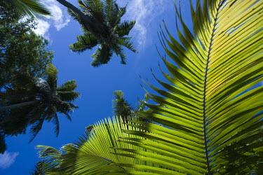 Palm leaf - Seychelles