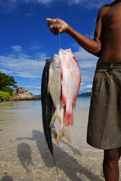 Fisherman with his catch of the day - Seychelles snapper,fish,red snapper,trevally,yellow fin red snapper,silver fish,catch,fisherman,fishing,beach,coast,coastal,food,livlihood