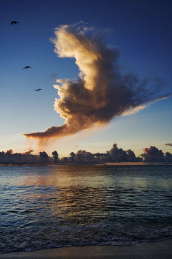 Storm clouds at sunset with sea birds over the ocean - Seychelles bird,birds