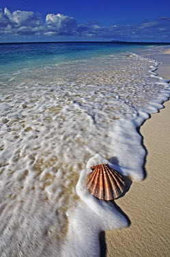 Seashell on shoreline - Seychelles. Sea,seas,environment,ecosystem,Habitat,beaches,Beach,shoreline,Shore,sea shore,shoreland,sea side,reef,Coral reef,tropics,tropic,reefs,corals,tropical,coral structure,coral,coral reefs,saltwater,Marin