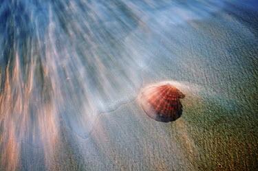 Seashell on shoreline - Seychelles. Marine snail,Gastropoda