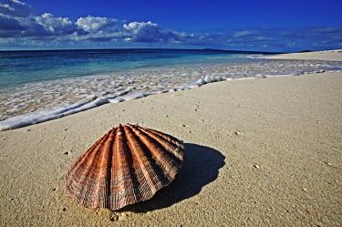 Seashell on shoreline - Seychelles. environment,ecosystem,Habitat,coast,Coastal,coast line,coastline,beaches,Beach,Aquatic,water,water body,Sandy shore,shell,saltwater,Marine,saline,exoskeleton,shoreline,Shore,sea shore,shoreland,sea si
