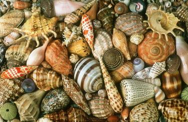 Selection of shells of marine snails, an illustration of biodiversity - African coasts coast,Coastal,coast line,coastline,saltwater,Marine,saline,exoskeleton,markings,marking,Macro,macrophotography,Aquatic,water,water body,shell,coloration,Colouration,Close up,patterns,patterned,Pattern