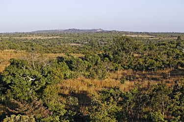 Miombo woodland - Zambia Woodland,Trees,Scrubland,Scrub,Landscape,Aerial,View