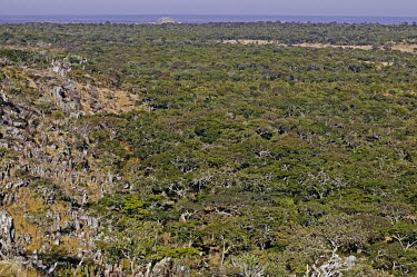 Aerial view of miombo woodland - Zambia Woodland,Trees,Scrubland,Scrub,Landscape,Aerial,View