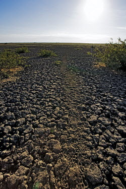 Dry cracked and parched Kafue River flats - Zambia Floodwater,Rains,Parched,Dried,Cracked land,Mud,Landscape,Seasonal,River flats